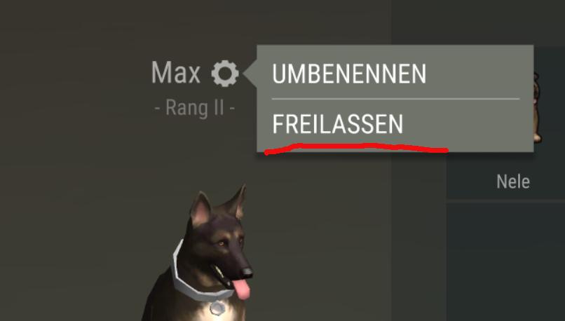 Hund freilassen